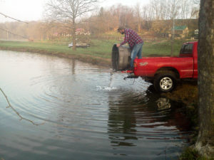 Dumping fish the easy way, from the hatchery into a bucket, back of the truck into the pond.